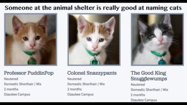 I loathe cats and I had to think twice about maybe taking Colonel Snazzypants home.